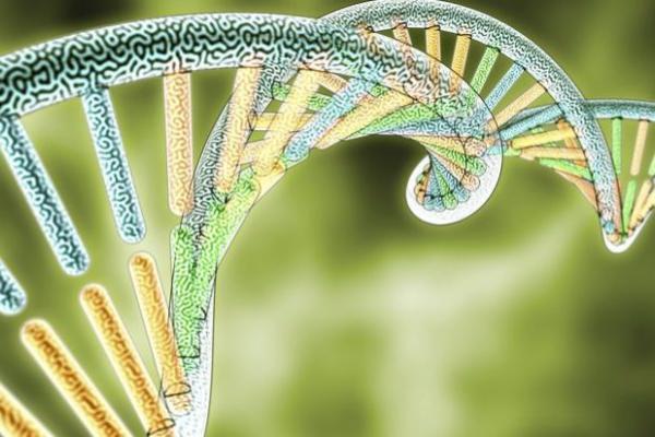 home  evolutionary genetics