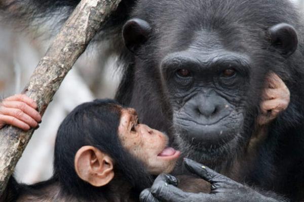 Primatology shutterstock_353062931-e1475572283106-960x407
